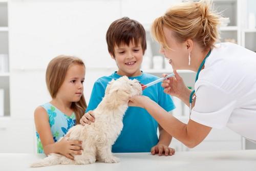 Vaccinations Nanaimo, BC